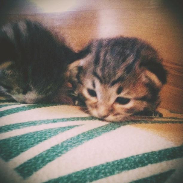Tontuelos  ❤❤❤ #goodnight #baby #kitten #cat #catsofinstag… | Flickr
