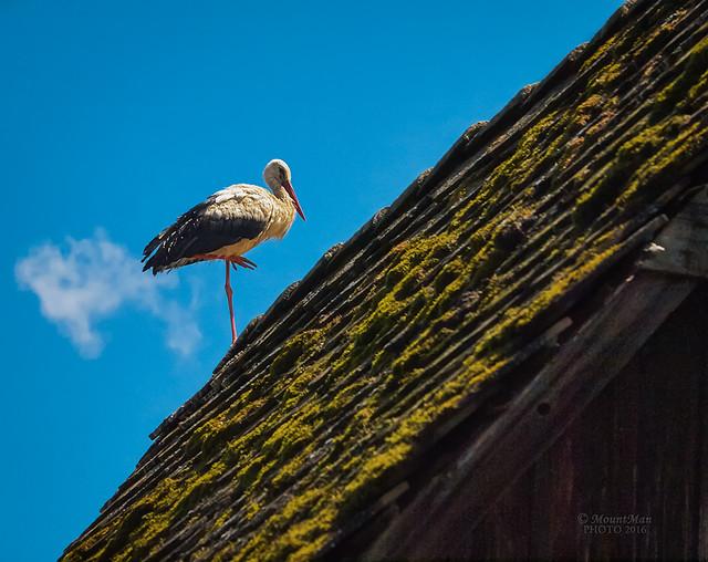 Na vrhu krova