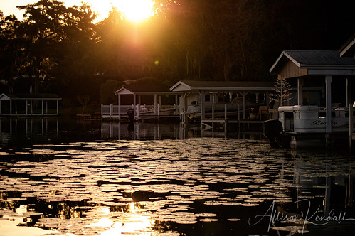 trees sunset sun holiday reflection water yellow river gold golden evening boat warm afternoon lily shoreline surface structure shore