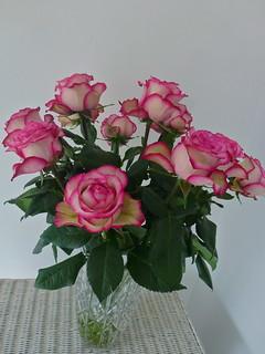 ecuador-roses | by GaryAScott
