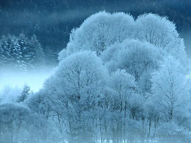 incanto d'inverno - magic winter