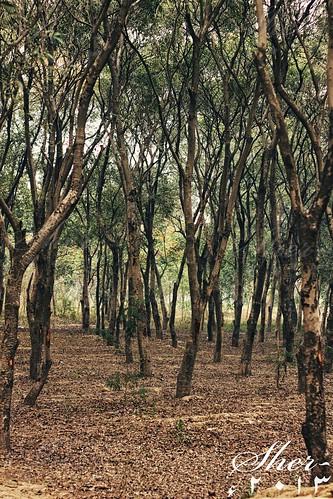 trees tree leaves forest wildlife nopeople symmetry jungle wilderness foilage mygearandme lahorewildlifesafari flickrstruereflection2 rememberthatmomentlevel1 flickrsfinestimages1 lahorezoosafari