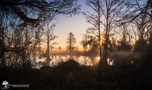 reflection water weather misty fog sunrise nc nikon moody foggy northcarolina swamp rays d600 newbern
