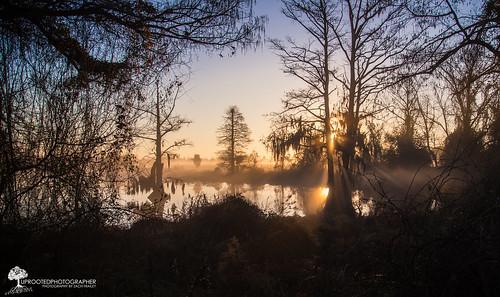reflection water weather misty fog sunrise nc nikon moody foggy northcarolina swamp rays d600 newbern