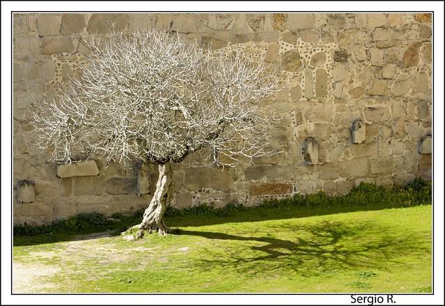 El árbol y la sombra III