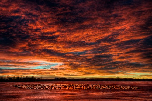 orange canada reflection ice clouds sunrise landscape geese colorado littleton 201301