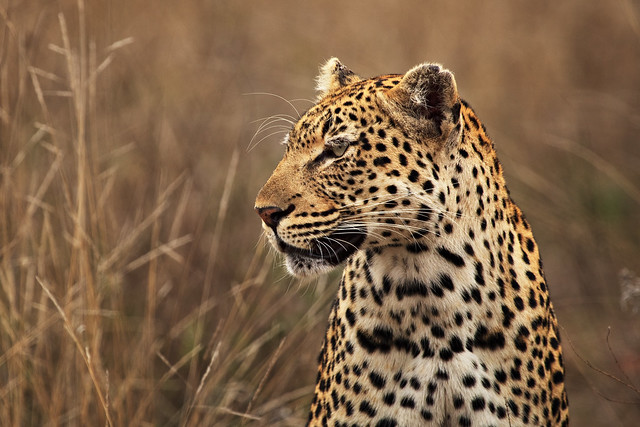 Previous: Big Cat of the Kruger