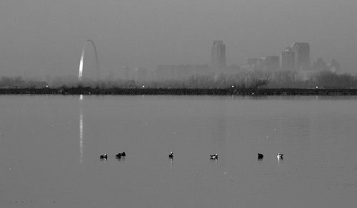 city morning blackandwhite reflection monochrome birds fog skyline illinois downtown arch stlouis ducks saintlouis horseshoelake