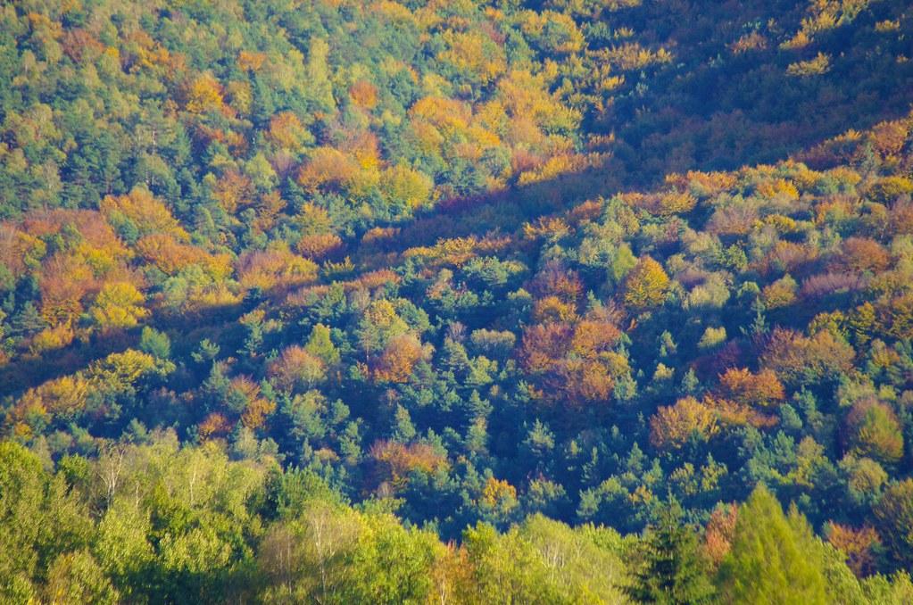 292/366: Forest outside my window
