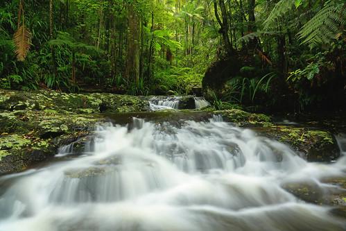 longexposure green nature beautiful creek canon river flow rainforest slow australia nsw shutter newsouthwales subtropical nightcap nightcapnationalpark 5dmkiii