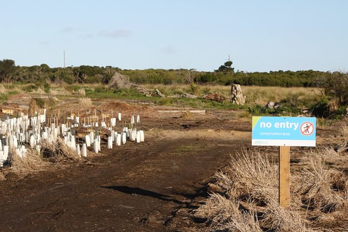 Revegetation works underway at a cleared former home site
