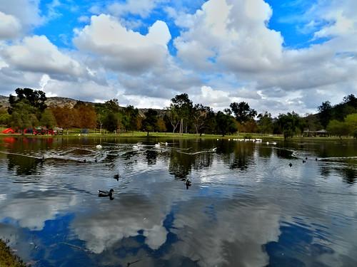california usa lake reflection birds clouds day cloudy pelican mallard brea carboncanyon nikoncoolpixp500