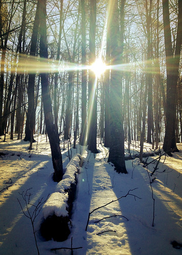 trees sun snow sunrise lens glare forrest nh flare epping