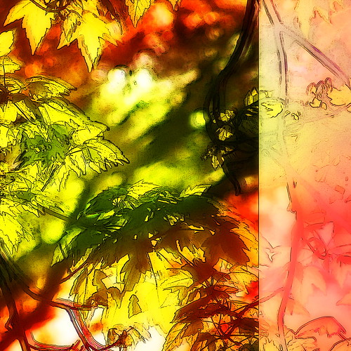 sunlight abstract leaves photomanipulation sunrise square digitalart vividimagination arteffects sharingart netartii