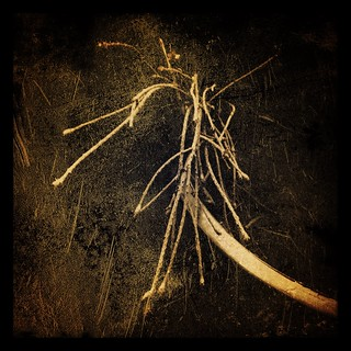 kindling | by Nature Morte