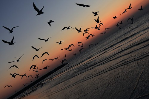 am beach blue flock flying galveston galvestonisland morning ocean orange seagulls silhouette sky summer sunrise waves