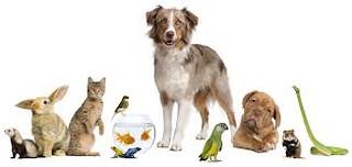 dogs,fish,cat   by mattwalker69