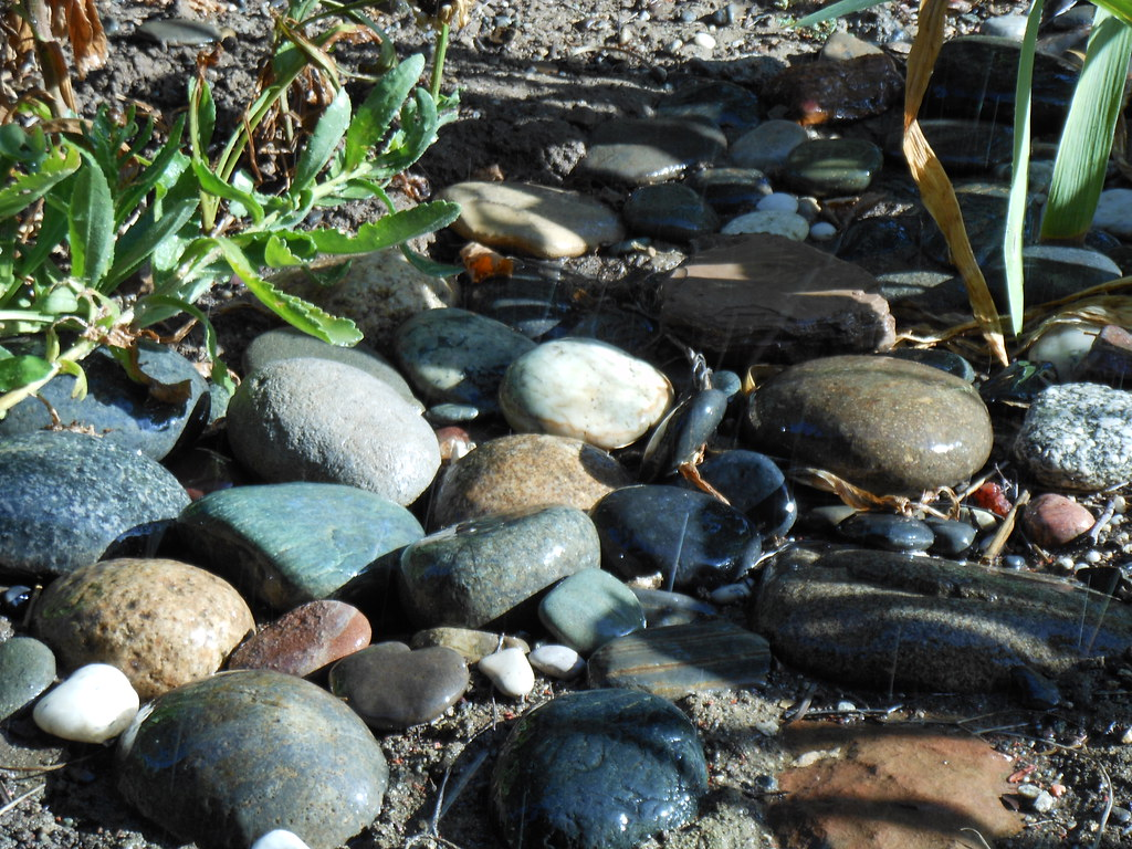 ... wet morning rocks | by Joanna Bourne