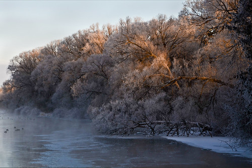 morning trees winter mist snow ontario canada nature water sunrise river landscape nikon guelph february riversidepark speedriver