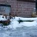 still-lives in snow 2013