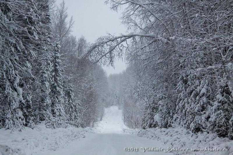Заснеженный лес