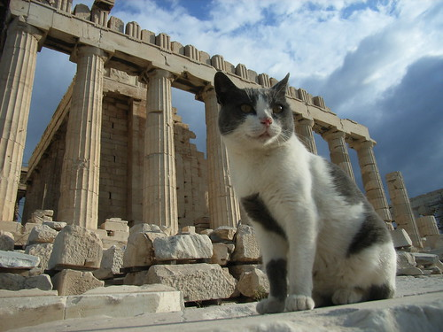 Parthenon and a cat | by ristok