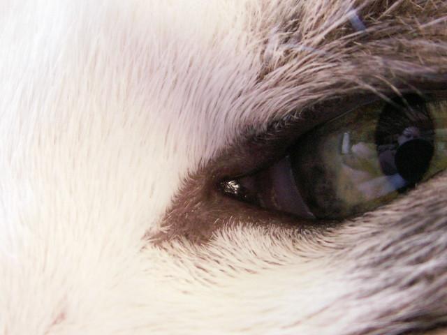 Eloise Eye