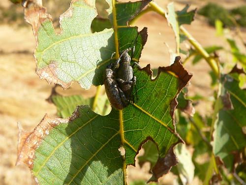 Walnut Bugs - please help ID | by Marianne Perdomo