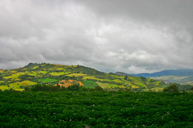 Guatavita - Potato Field