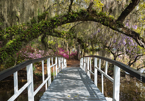 southcarolina sc lowcountry charleston magnoliaplantationgardens bridge azalea liveoak resurrectionfern dappledlight outdoors landscape photography