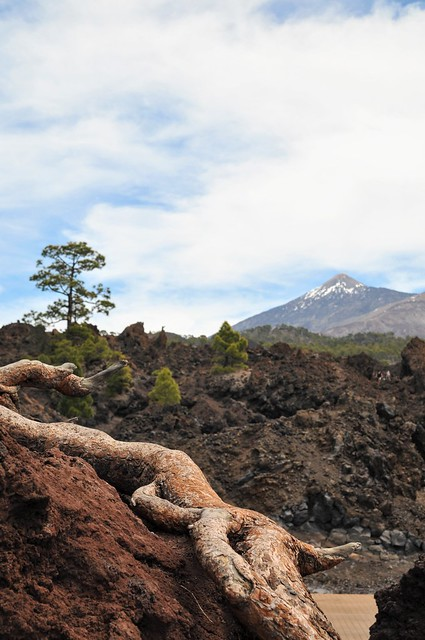 On my way to Teide, Tenerife