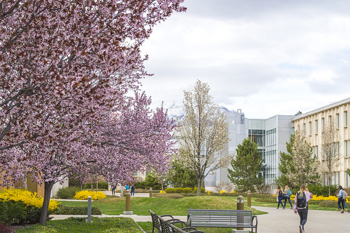 Spring Color on Campus | by aaronrhawkins