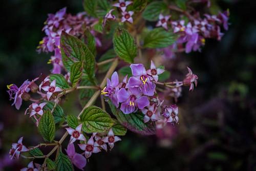 plante végétation fleur kabbinakad karnataka inde ind