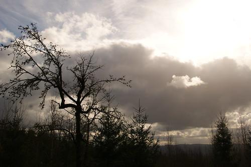 park trees sky sun nature clouds oregon beaverton 2013 coopermountainnaturepark