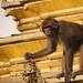 Swayambunath: Monkey Temple