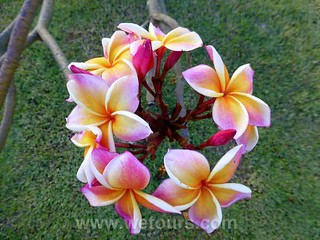 Flowers of Bangkok   by WeTours