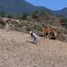 Rompiendo terrones - Breaking dirt clods; cerca de Zoogocho, Región Sierra Juárez, Oaxaca, Mexico por Lon&Queta