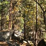 USA, PN Yosemite 12