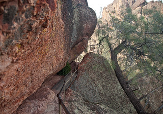 Narrow Trail at PInnacles | by nocureforgravity