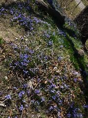 土, 2013-04-06 11:37 - ブルックリン植物園