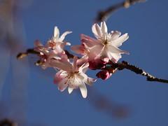 土, 2013-04-06 12:12 - ブルックリン植物園
