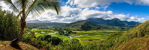 Hanalei Valley, Kauai | by Morris Hersko