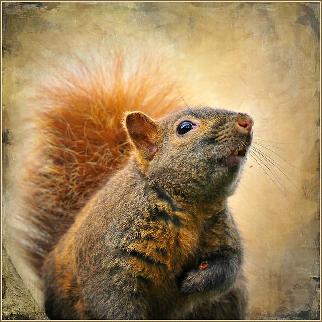 got nuts??