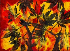 """Cannabis Like Maples"""