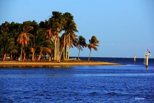 sunset sea beach nature landscape golden coast oceanview coconuttrees mathesonhammockpark palmstree sunsetmiami canoneos60d parksmiami landscapemiami zstincer