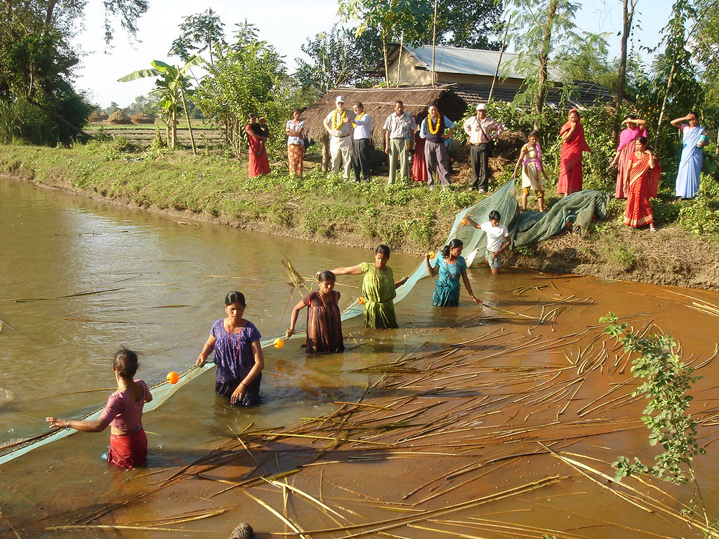Tharu ethnic women harvesting fish from their farm pond in… | Flickr