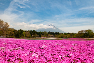 Shibazakura Festival, Mt Fuji, Tokyo Japan | by Ben & Gab