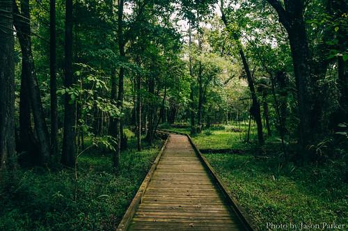 crystalsprings tampabay zephyrhills greeb green forest woods wild nature scenic outdoor landscape boardwalk trai trail hiking color vibrant vsco vscofilm centralflorida