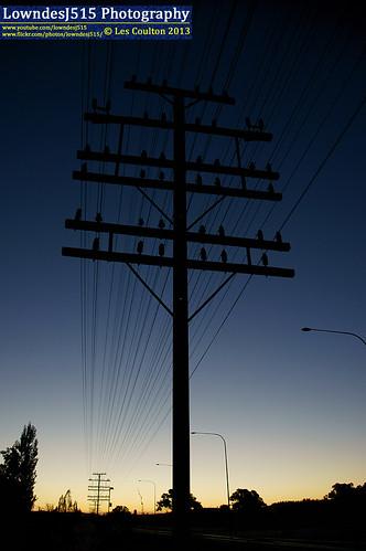 dusk mainsouth southernnsw poleline cootmundra