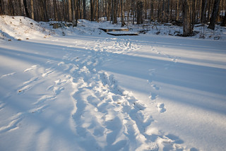 Footprints on our Snowy Pond | by goingslowly